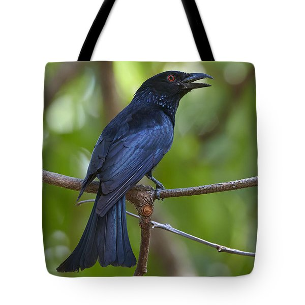 Spangled Drongo Calling Queensland Tote Bag