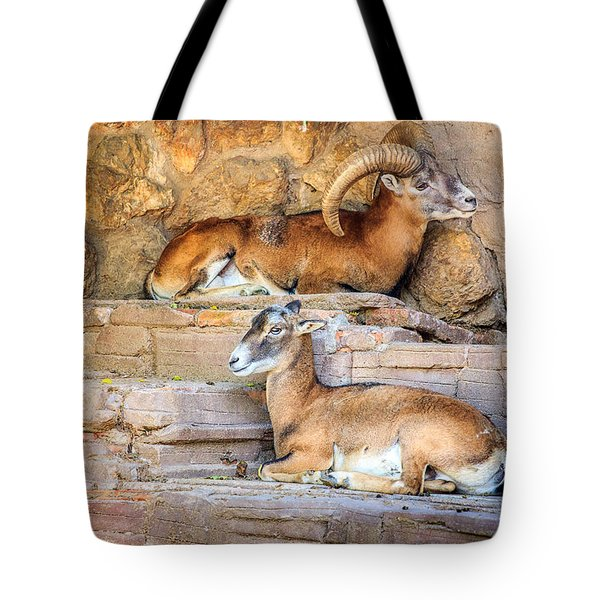 Spanish Ibex Tote Bag
