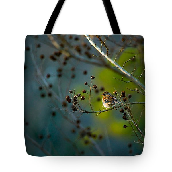 Sparrow In The Warm Light Tote Bag by Shelby  Young