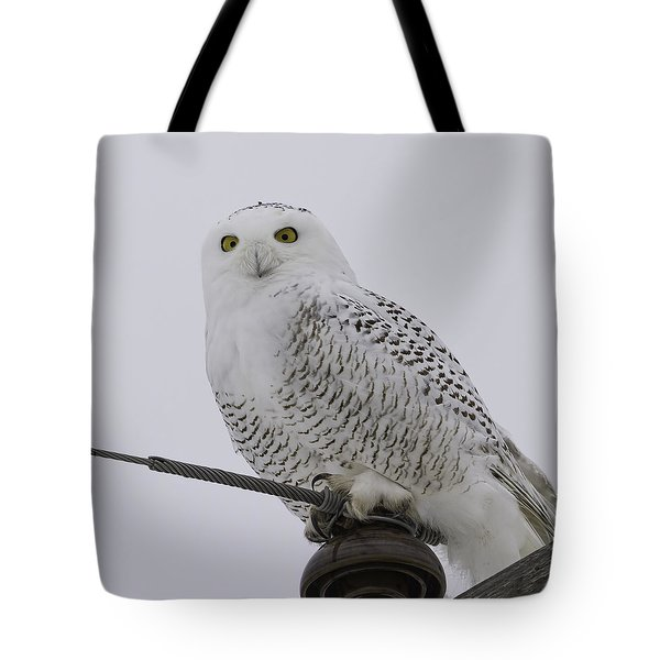 Special Owl Tote Bag