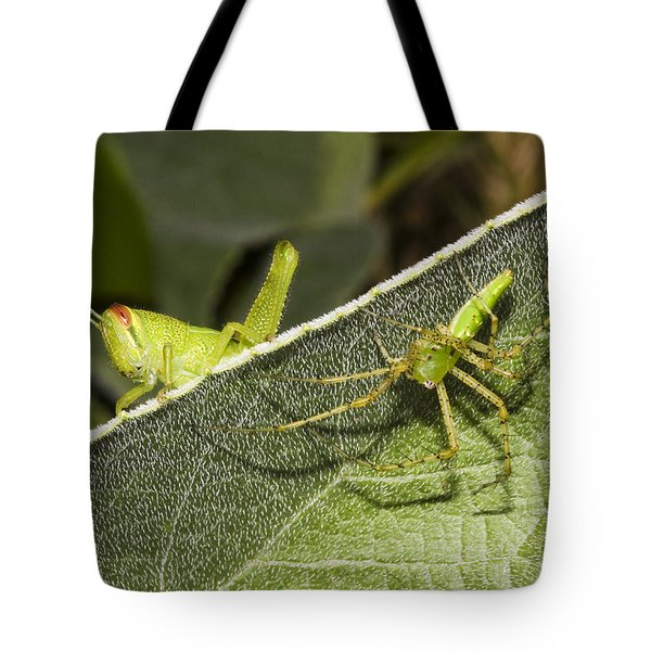 Spider-grasshopper Standoff Tote Bag