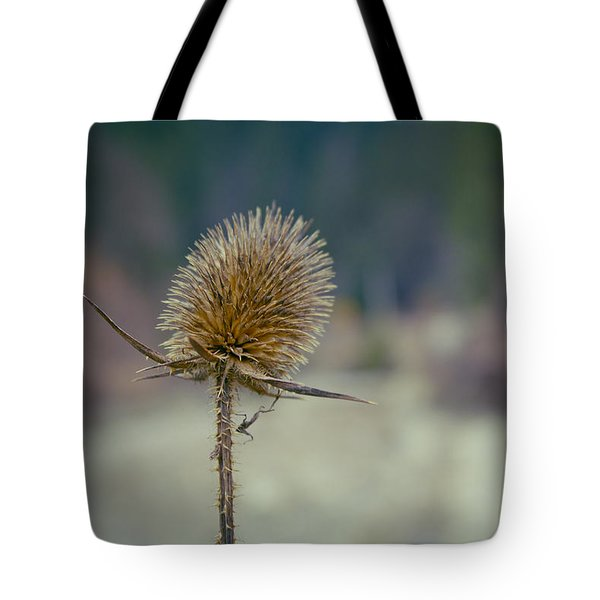 Spiny Weed Close-up Tote Bag
