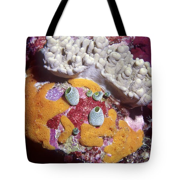 Sponge Head Tote Bag