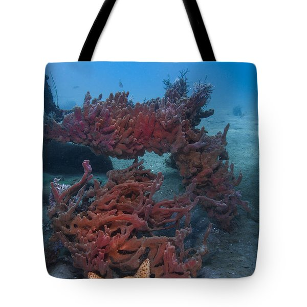 Sponges And A Star Tote Bag