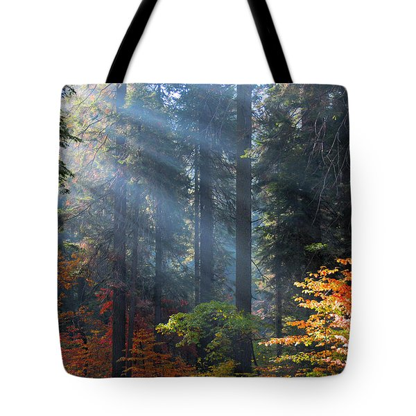 Spotlight On Autumn Tote Bag by Lynn Bauer