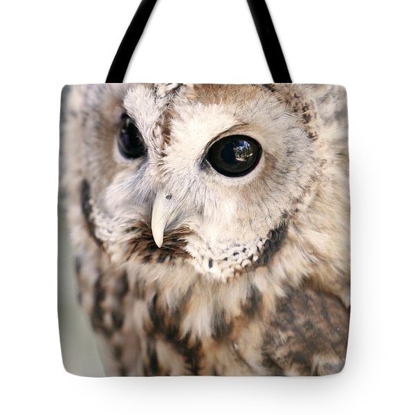Tote Bag featuring the photograph Spotted Owl by Shoal Hollingsworth