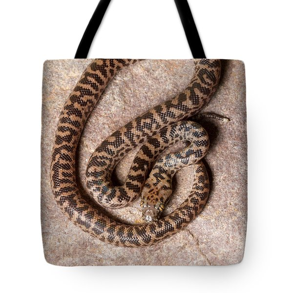 Spotted Python Antaresia Maculosa Top Tote Bag