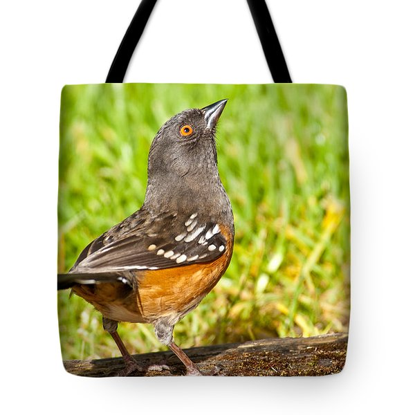 Spotted Towhee Looking Up Tote Bag