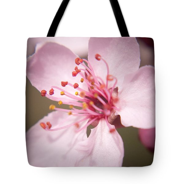 Spring Blooms 6697 Tote Bag by Timothy Bischoff