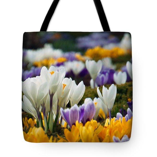 Spring Crocus Tote Bag by Dianne Cowen