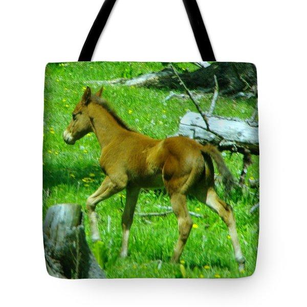 Spring Colt  Tote Bag
