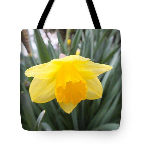 Spring Daffodil Tote Bag