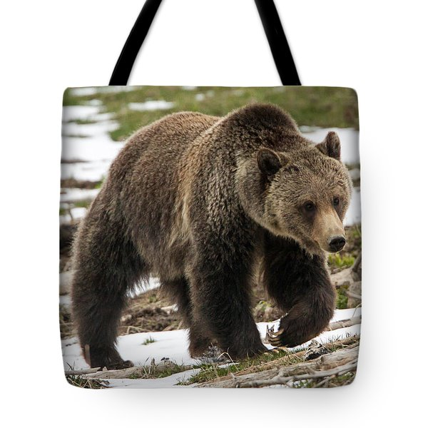 Tote Bag featuring the photograph Spring Grizzly Bear by Jack Bell