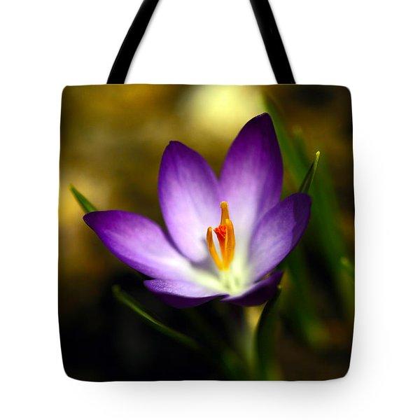 Spring Has Sprung Tote Bag by Karol Livote