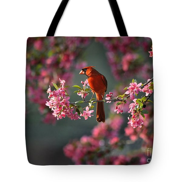 Spring Morning Cardinal Tote Bag