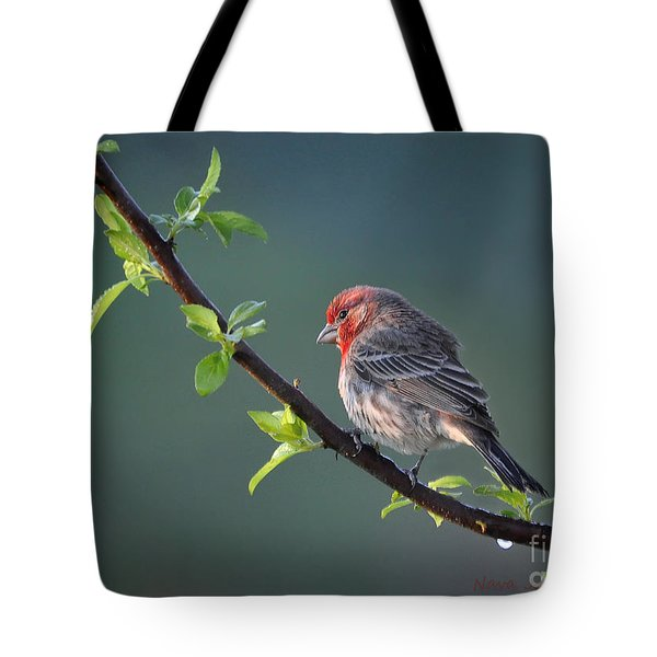 Song Bird In Spring Tote Bag by Nava Thompson