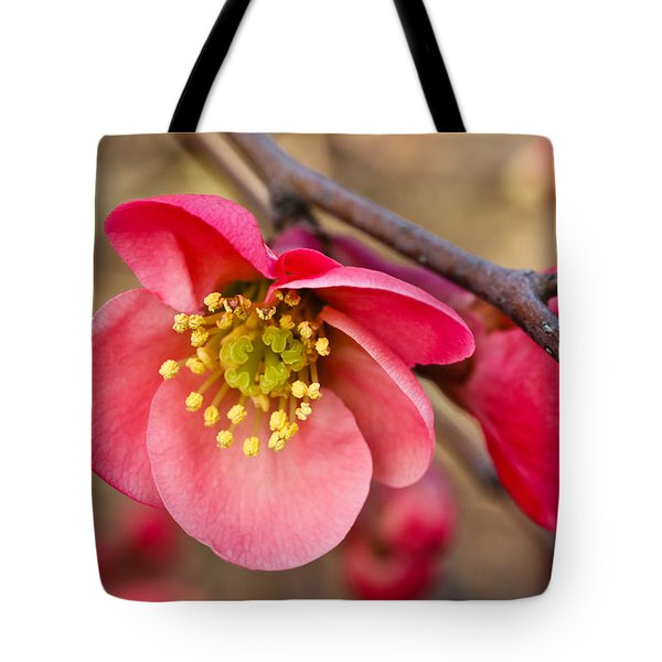 Springtime Quince Tote Bag by Julie Andel