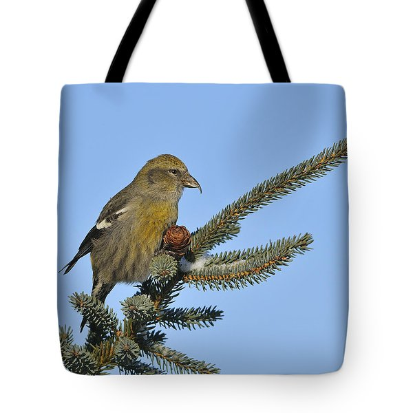 Spruce Cone Feeder Tote Bag by Tony Beck