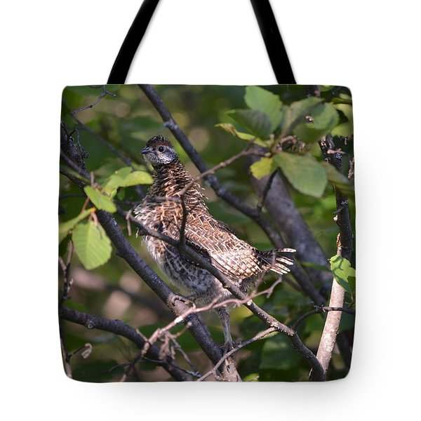 Tote Bag featuring the photograph Spruce Grouse2 by James Petersen