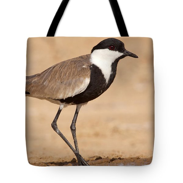 Spur-winged Lapwing Vanellus Spinosus Tote Bag by Eyal Bartov