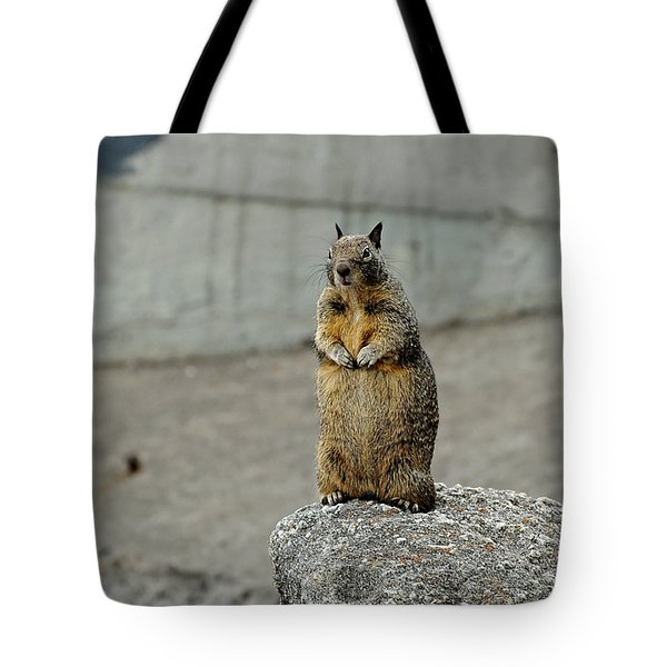Squirrel At Lover's Point  Tote Bag