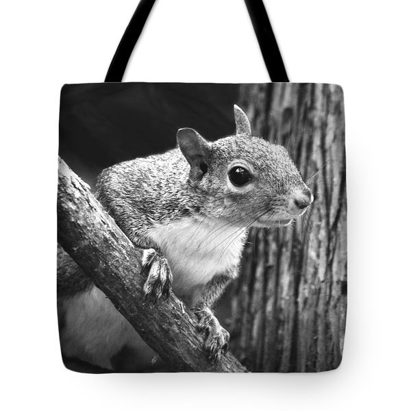 Squirrel Black And White Tote Bag by Sandi OReilly