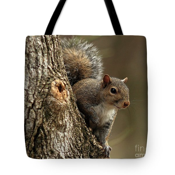 Squirrel Tote Bag by Douglas Stucky