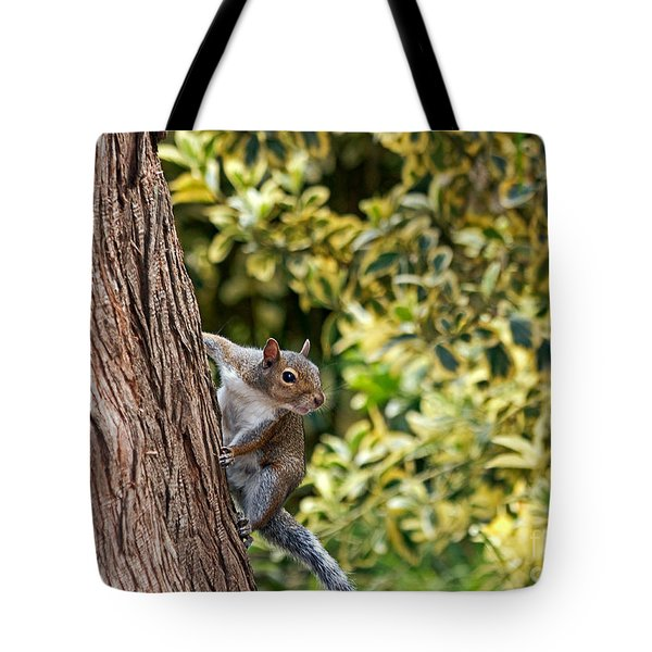Tote Bag featuring the photograph Squirrel by Kate Brown