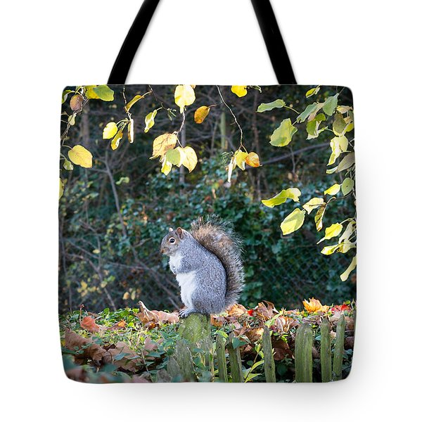Squirrel Perched Tote Bag by Matt Malloy
