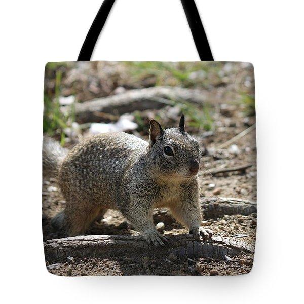 Squirrel Play  Tote Bag