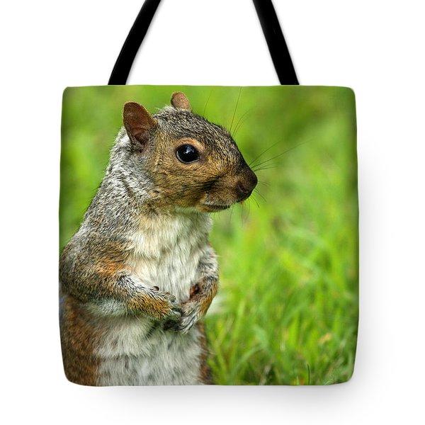 Squirrel Pose Tote Bag by Karol Livote