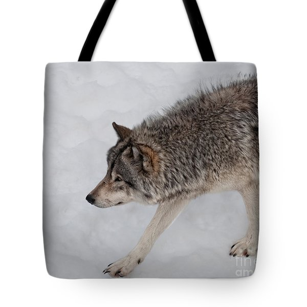 Tote Bag featuring the photograph Stalker by Bianca Nadeau