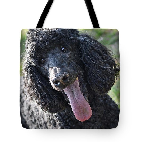 Standard Poodle Tote Bag by Lisa Phillips