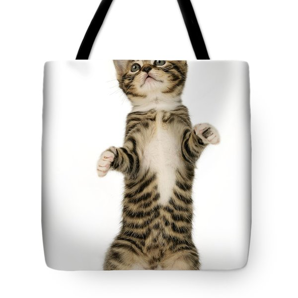 Standing Cat Ck305 Tote Bag by Greg Cuddiford