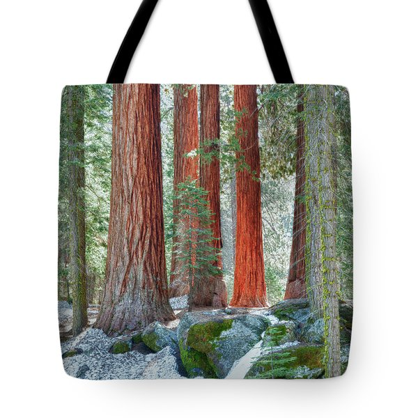 Standing Tall - Sequoia National Park Tote Bag by Sandra Bronstein