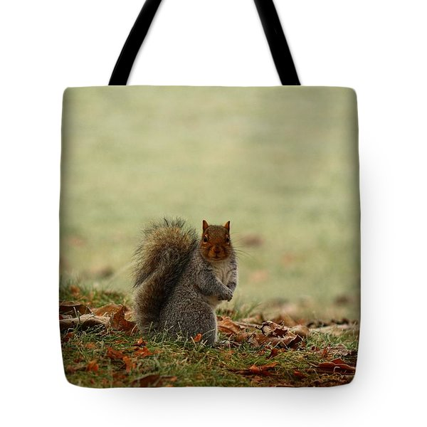 Tote Bag featuring the photograph Stare Down by Lynn Hopwood