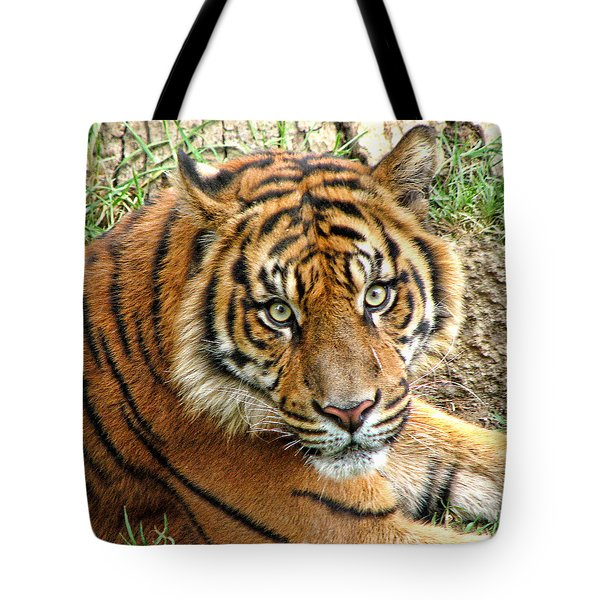Staring Tiger Tote Bag