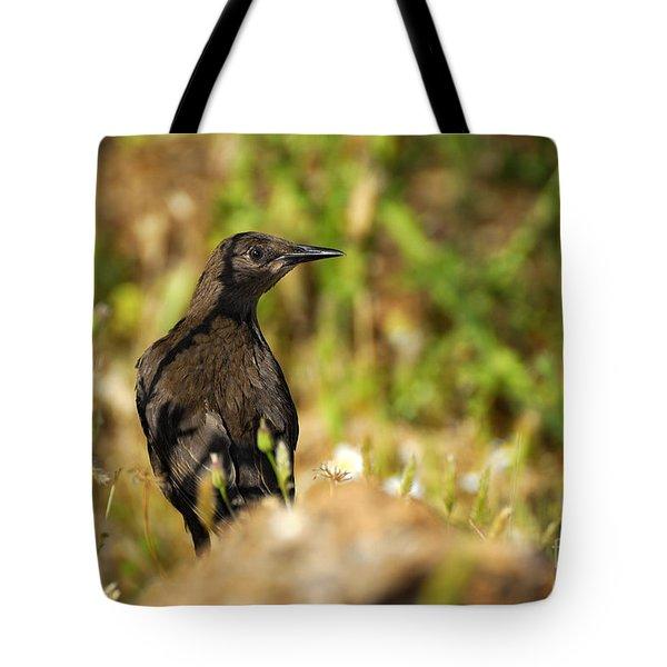 Starling Tote Bag by Guido Montanes Castillo