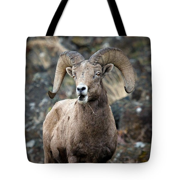 Tote Bag featuring the photograph Startled Ram by Steve McKinzie