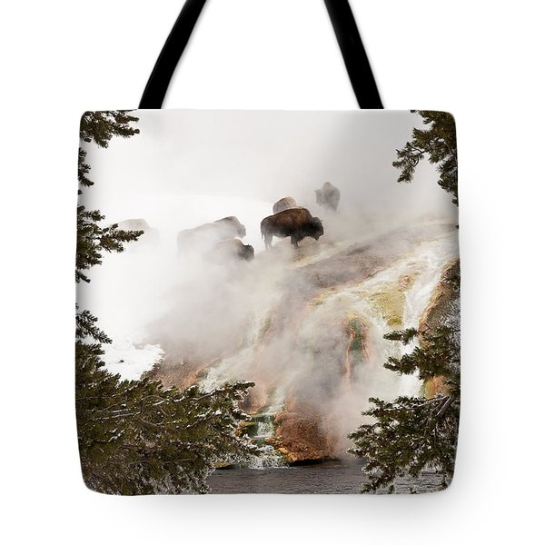 Steamy Bison Tote Bag