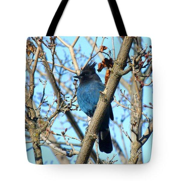 Steller's Jay In Winter Tote Bag