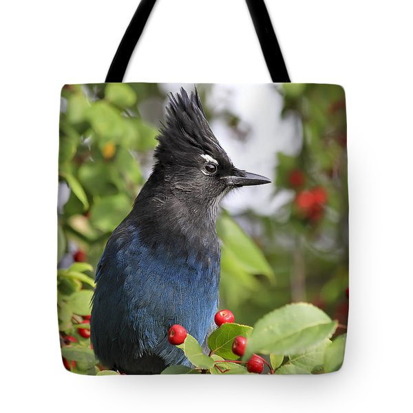 Steller's Jay And Red Berries Tote Bag