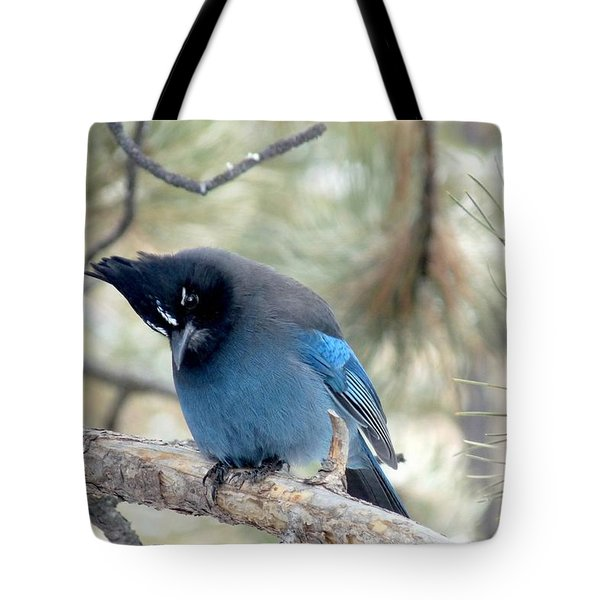 Steller's Jay Looking Down Tote Bag
