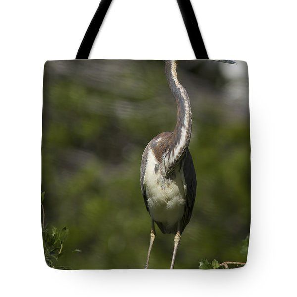 Stepping Carefully Tote Bag by Phill Doherty