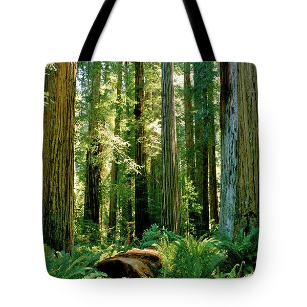 Stout Grove Coastal Redwoods Tote Bag by Ed  Riche