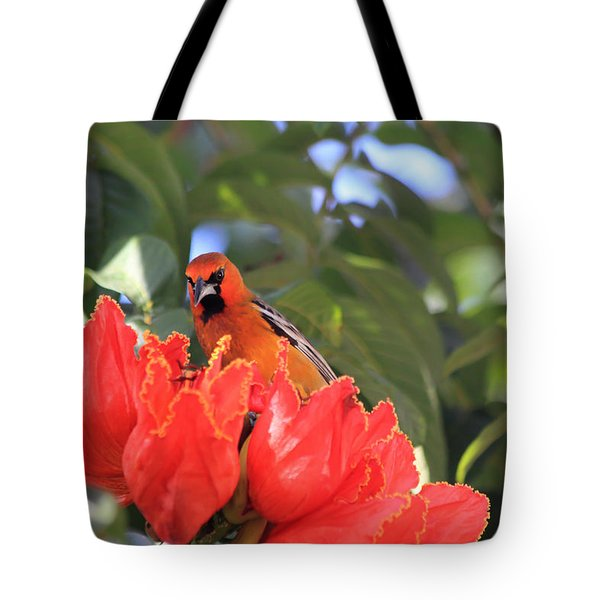 Streak-backed Oriole Tote Bag