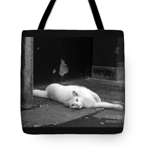 Street Cat Tote Bag