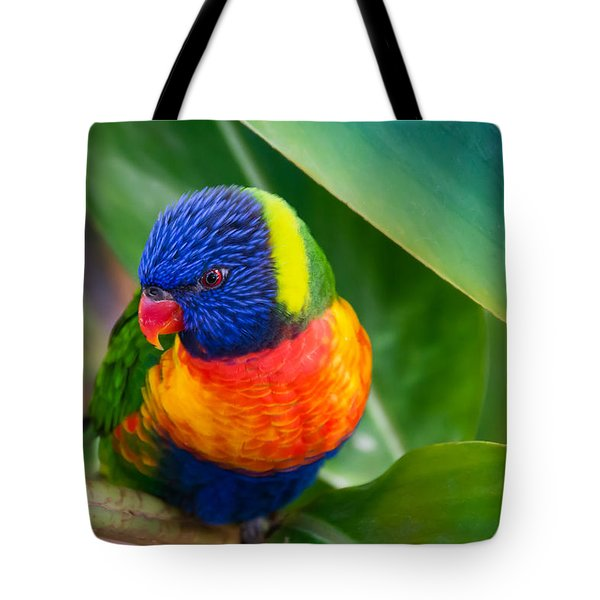 Striking Rainbow Lorakeet Tote Bag