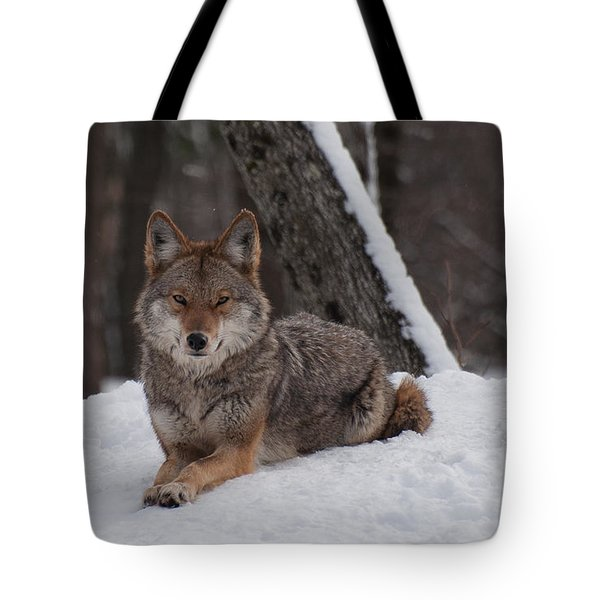 Tote Bag featuring the photograph Striking The Pose by Bianca Nadeau