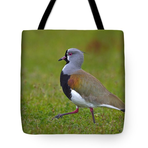 Strutting Lapwing Tote Bag by Tony Beck